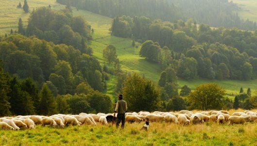 buon-pastore